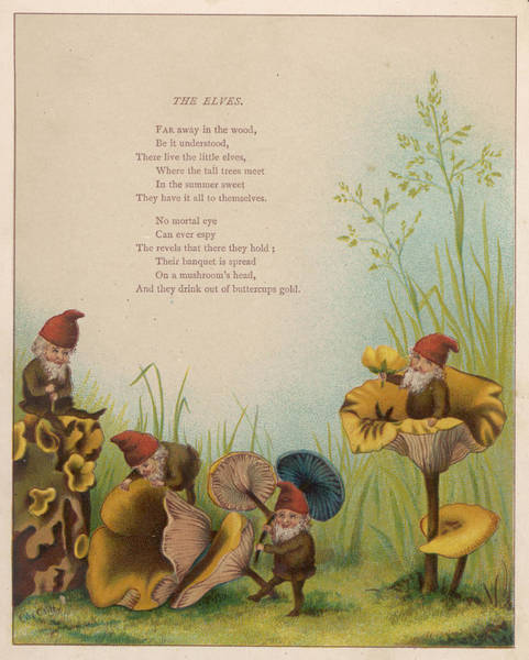 Folklore Drawing - Drinking From Buttercups, Sitting by Mary Evans Picture Library