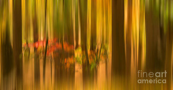 Photograph - Drizzling Fall In Forest by Rima Biswas