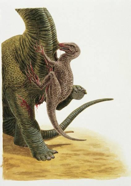 Wall Art - Photograph - Dromaeosaurus Dinosaur by Deagostini/uig/science Photo Library