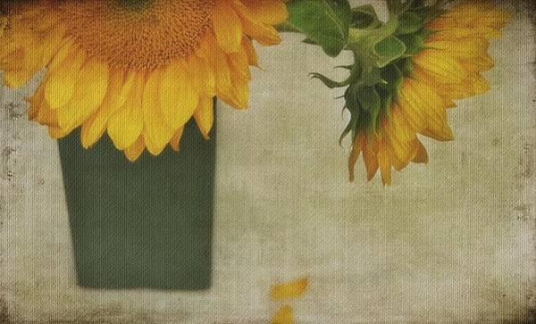 Sunflowers In A Vase Photograph - Droopy Heads by Stephanie Calhoun