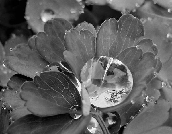 Photograph - Drop In by Suzy Piatt