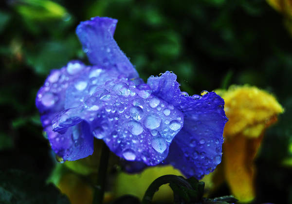 Photograph - Droplets 6 by Staci Bigelow