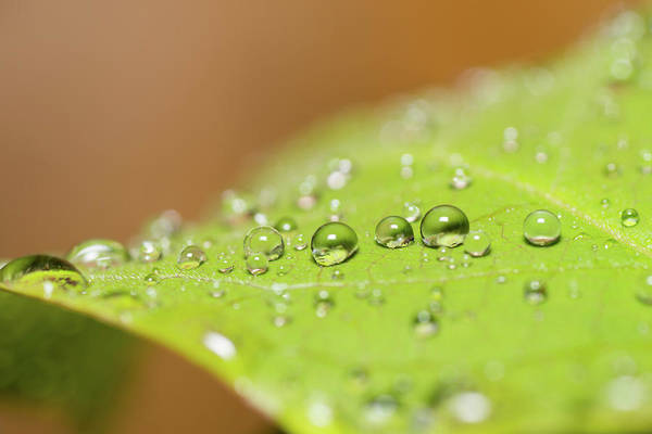Selective Focus Photograph - Droplets On A Leaf by Michael Phillips