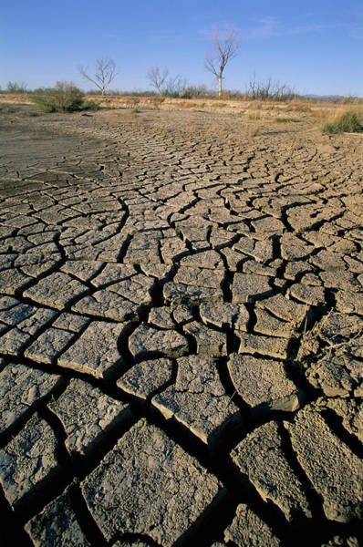 Soil Science Wall Art - Photograph - Drought by David Hay Jones/science Photo Library