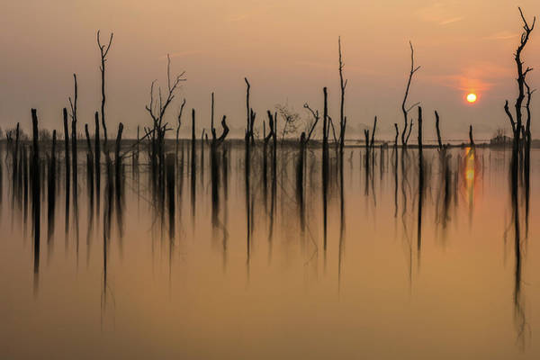Wall Art - Photograph - Drowned Forest ........... by Piet Haaksma