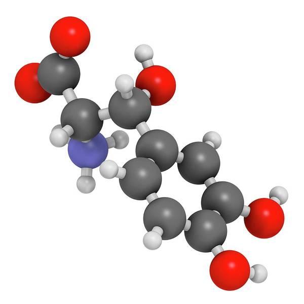 Neurotransmitter Wall Art - Photograph - Droxidopa Hypotension Drug Molecule by Molekuul