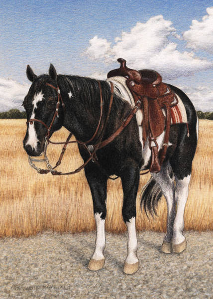 Equine Drawing - Drum by Katherine Plumer