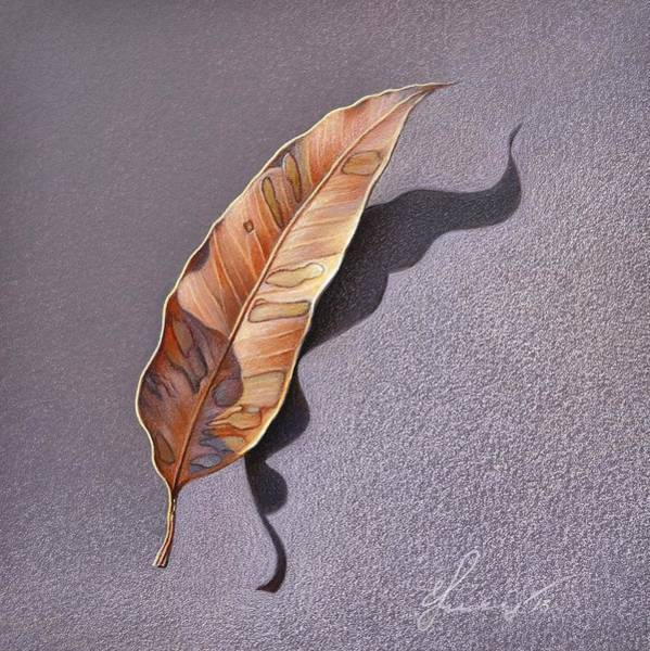 Drawing - Dry Leaf by Elena Kolotusha