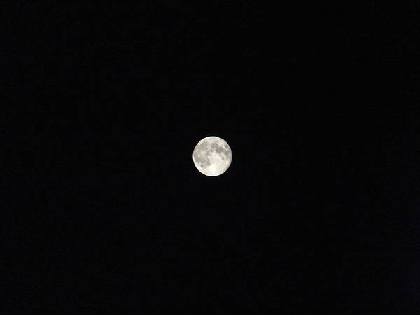 Photograph - Dry Moon by Marc Philippe Joly