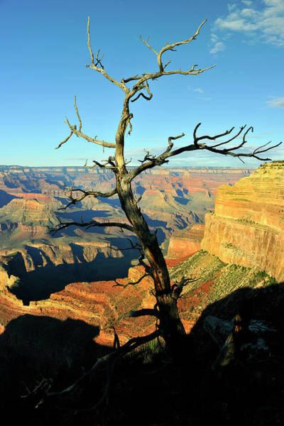 Southwest Usa Photograph - Dry Tree In Grand Canyon Arizona Usa by Pavliha