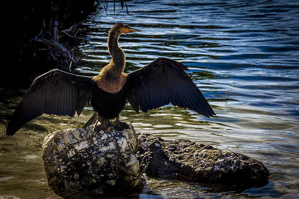 Cormorant Wall Art - Photograph - Drying Time by Marvin Spates