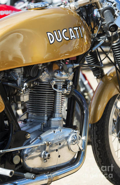 Photograph - Ducati Desmo Mk 3  by Tim Gainey