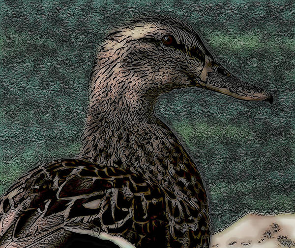 Photograph - Duck Art Tribal Mallard Teal II by Lesa Fine