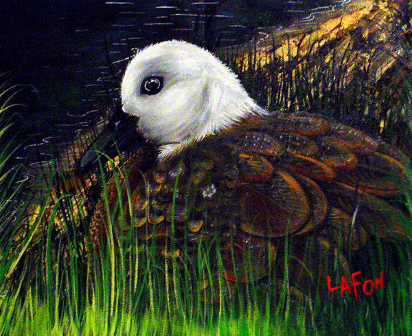 Duck At Dusk Art Print