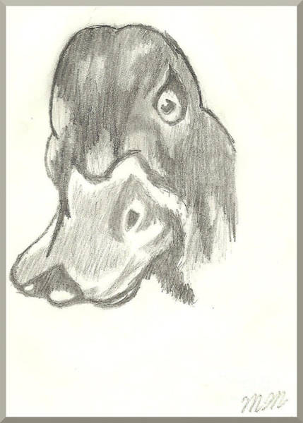 Drawing - Duck Bill In Pencil by Marissa McAlister