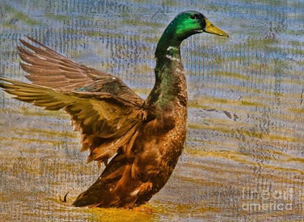Photograph - Duck Duck Goose by Deborah Benoit