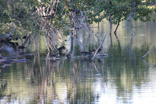 Photograph - Duck Ecosystem by Donna L Munro