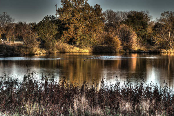 Photograph - Duck Pond 1 by Dimitry Papkov