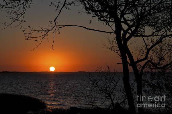 Photograph - Duck Sunset by Ronald Lutz