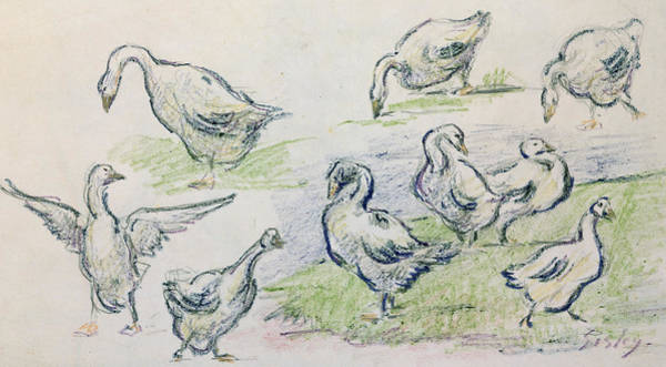 Crayon Drawing - Ducks by Alfred Sisley