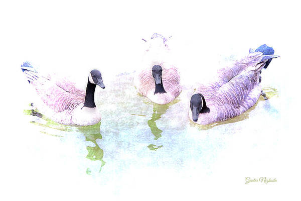 Photograph - Ducks by Gunter Nezhoda