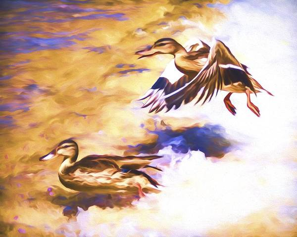 Mixed Media - Ducks Landing by Priya Ghose
