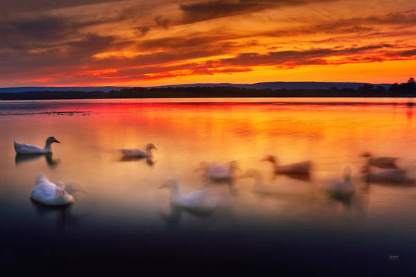 Photograph - Ducks On Dallas Bay by Steven Llorca
