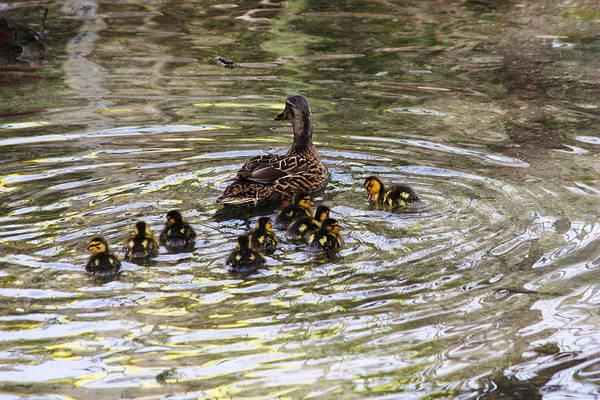 Chicken Feet Photograph - Ducky by Jeff Tuten
