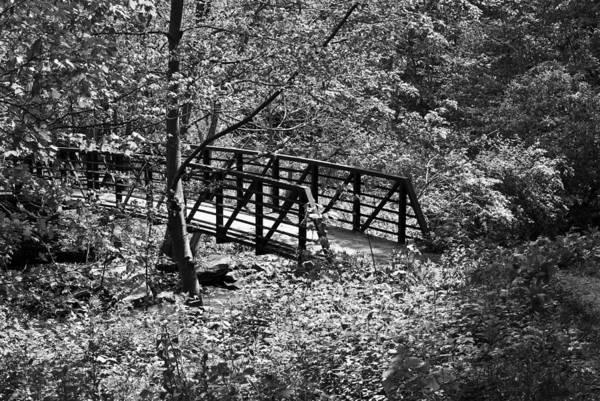 Photograph - Duff Park Lan 215 by G L Sarti
