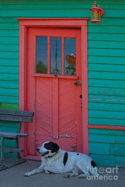 Greeters Photograph - Duke by Liane Wright