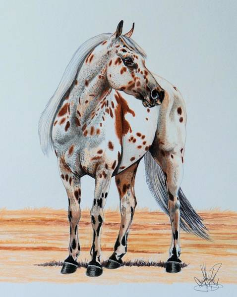 Appaloosa Drawing - Duke's Go Hancock by Cheryl Poland