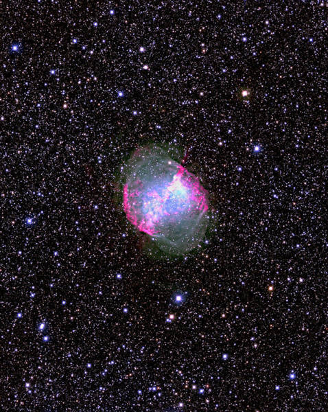 Canada-france-hawaii Telescope Wall Art - Photograph - Dumbbell Planetary Nebula by J-c Cuillandre/canada-france-hawaii Telescope/science Photo Library