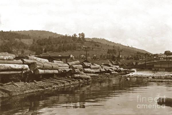 Photograph - Dumping Logs Into The Mill Pond Circa 1910 by California Views Archives Mr Pat Hathaway Archives