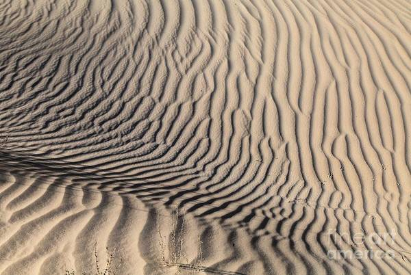 Photograph - Dune Depression by Adam Jewell