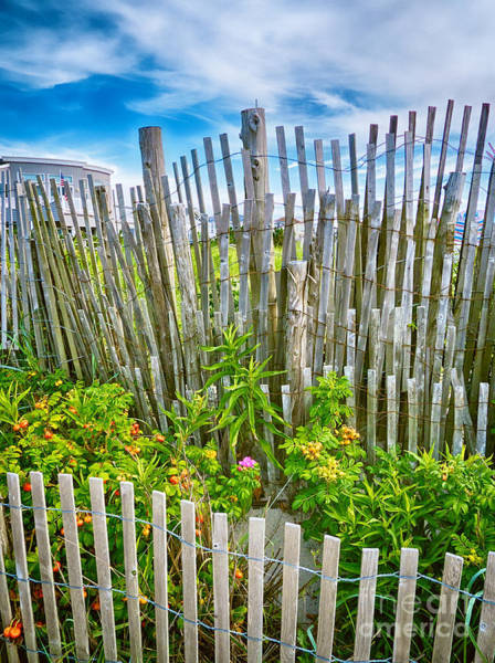 Photograph - Dune Fences by Mark Miller