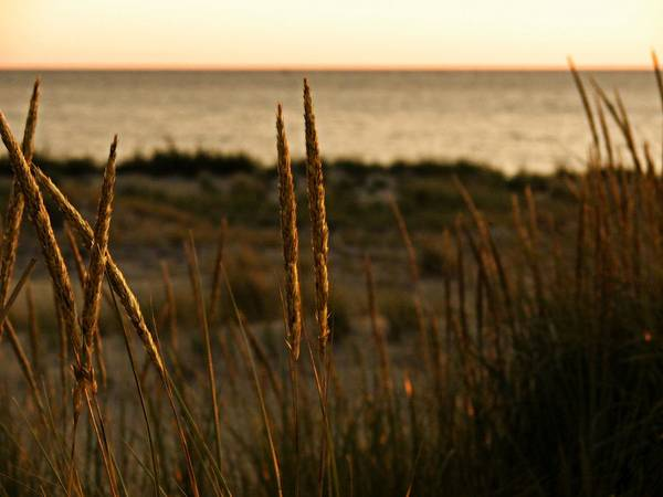 Photograph - Dune Grass At Sunset by Michelle Calkins
