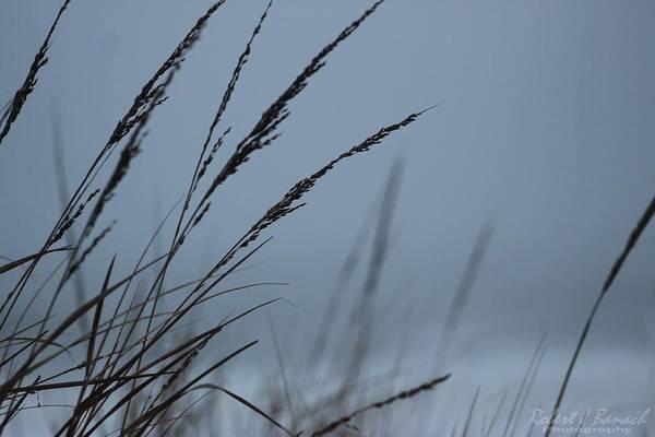 Photograph - Dune Grass On A Foggy Day by Robert Banach