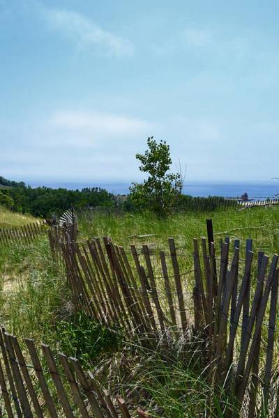 Holland State Park Photograph - Dune Mending Fences by Michelle Calkins