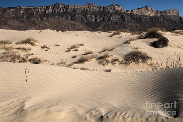 Photograph - Dunes At The Guadalupes by Adam Jewell