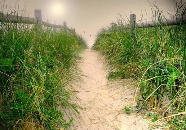 Wall Art - Photograph - Dunes Catch Light by Diana Angstadt