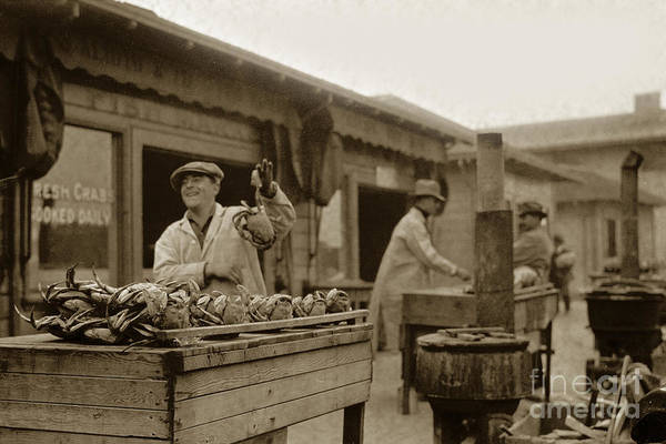 Photograph - Dungeness Crabs At Fisherman's Wharf At San Francisco California. Circa 1935 by California Views Archives Mr Pat Hathaway Archives