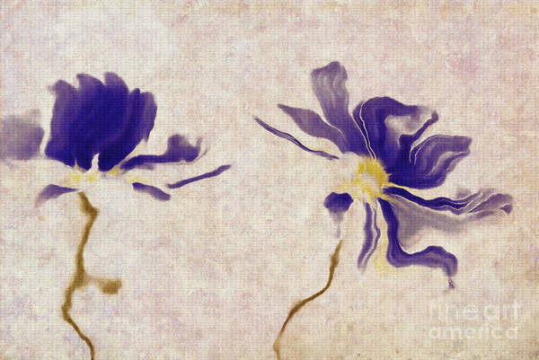Simplicity Digital Art - Duo Daisies - A01v03t01b by Variance Collections