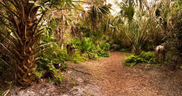 Florida Flora Photograph - Dusk In Hardwood Hammock by Matt Tilghman