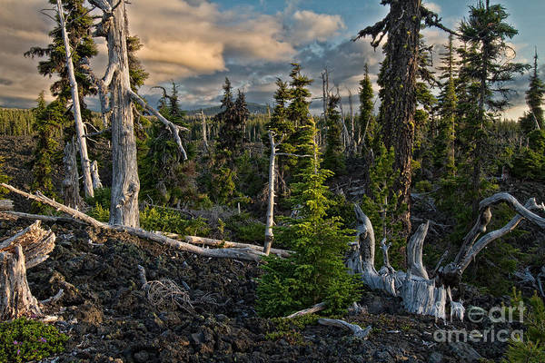 Photograph - Dusk In The Lava Fields by Stuart Gordon