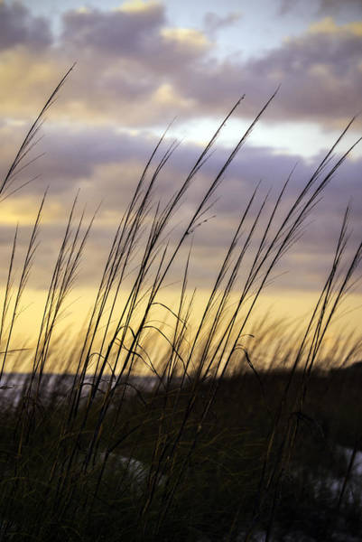Photograph - Dusk Light by Judy Hall-Folde