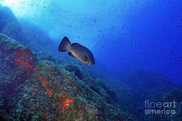 Wall Art - Photograph - Dusky Grouper by Sami Sarkis