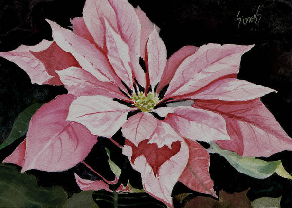 Painting - Dustie's Poinsettia by Sam Sidders