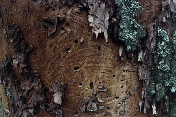 Elm Photograph - Dutch Elm Disease by Alan Punton Esq/science Photo Library