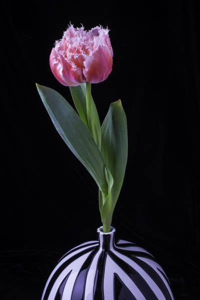 Dutch Tulip Photograph - Dutch Tulip In Striped Vase by Garry Gay