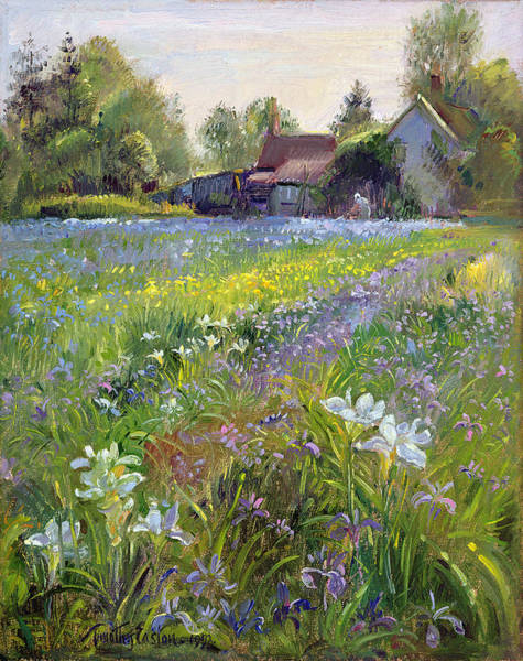 Spring Painting - Dwarf Irises And Cottage by Timothy Easton